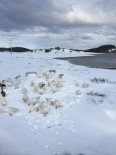 Buz Tutan Gölde Kartpostallık Görüntüler Oluştu