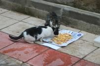 Mahallenin Kedileri Ona Emanet