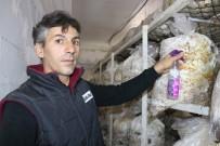 YANıLMA - (Özel) Vanlı Mantar Üreticisi Yeşil Küf İlacı Yaptı