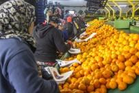 SOYA FASULYESİ - 2019'Da Gıda Ve Tarımda Öne Çıkanlar