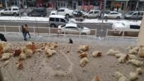 Belediye Çalışanları Kuşlar İçin Yiyecek Bıraktı
