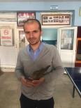 Okul Müdürü Kanadı Kırılan Kumruyu Tedavi Ettirip Sahiplendi