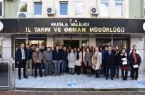 ZEYTİNYAĞI - Eğiticilere 'Zeytinde Budama' Eğitimi Verildi