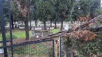 YAĞIŞLI HAVA - Karacabey'de Fırtına Ağaçları Devirdi