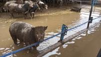 KARNABAHAR - 3 Bin Dönüm Tarım Arazisi Hırsızlar Yüzünden Sel Suları Altında Kaldı