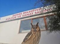 Antalya'da Nesli Tükenmek Üzere Olan 'Puhu Baykuşu' Bulundu