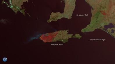 Kanguru Adası'nın üçte biri yandı
