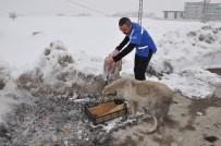 Yüksekova'da Sokak Hayvanları İçin Yiyecek Bırakıldı