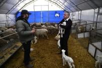 MUSTAFA ŞAHİN - Kayseri'de Küçükbaş Hayvancılıkta Mutlu Eden Gelişmeler