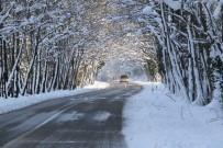 Ağaç Tünellerde Kar Güzelliği