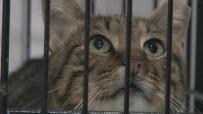 TEDAVİ SÜRECİ - (Özel) Üst Solunum Yolu Enfeksiyonları Sokak Hayvanlarını Da Etkiliyor
