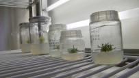 İSTANBUL TEKNIK ÜNIVERSITESI - Antarktika'dan Getirilen Bitki Türleri Niğde'de Koruma Altında