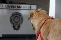 POLİS MERKEZİ - Kaybolan köpek karakola sığındı