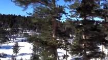 HAFTA SONU TATİLİ - Sarıkamış İlçesindeki Cıbıltepe Kayak Merkezi'nde Hafta Sonu Yoğunluğu