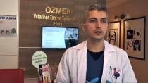 KÖK HÜCRE - 'Tarçın'ın Dişleri Kök Hücre Nakliyle Kurtuldu
