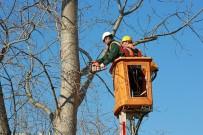 KATKI MADDESİ - Ataşehir'de Ağaç Dalları Elektriğe Dönüşüyor