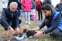YAVRU KÖPEKLER - Belediye Başkanı Ve Gönüllüler Yavru Köpekleri Elleriyle Besledi