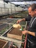 GÖLBAŞI - Gölbaşı Belediyesi Kendi Çiçeğini Üretiyor