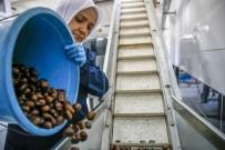 KATKI MADDESİ - Günlük 1 Ton 200 Kilogram Üretim Gerçekleştiriliyor
