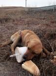 KÖPEK - Yaralı Köpeğe Belediye Sahip Çıktı
