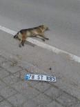 KÖPEK - Köpeğe Çarpan Sürücü Plakasını Düşürüp Kaçtı
