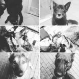 KÖPEK - Polonya'da 6 Polis Köpeği Feci Şekilde Can Verdi