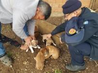 KÖPEK - Yavru Köpekler İtfaiyenin Yardımıyla Kurtarıldı