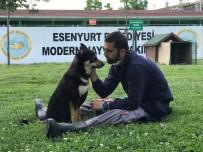 KÖPEK - (Özel) Trafik Kazasında Engelli Kalan Köpek Yürüteç İle Yeniden Hayata Tutundu