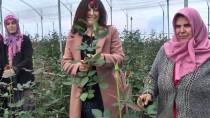 KOOPERATIF - Kadınlar Köylerini 'Gül'le Kalkındıracak