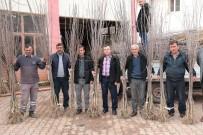 UMUTLU - Akhisar'da Artık Kiraz Da Yetişecek