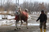 BAKANLIK - Erzincan'da Tek Tırnaklı Hayvanlara Mikroçipli Takip