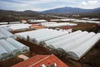 KOOPERATIF - Seracılık Köyden Şehre Göçü Durdurdu