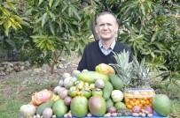 MİLYAR DOLAR - Tropikal Meyveler Yok Satıyor