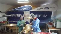 KÖPEK - Tufanbeyli'de Sokak Hayvanları Kısırlaştırıldı