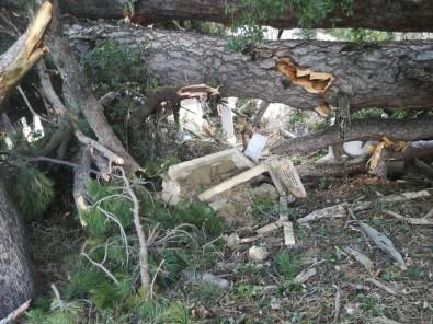 150 Yıllık Çam Ağacı Devrildiği Yerdeki Mezarları Paramparça Etti