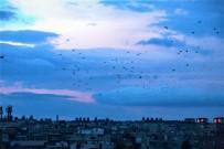 SONBAHAR - Şanlıurfa Semalarında Kuşların Dansı