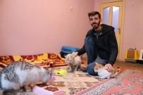 Örnek Genç, Depremzede Kedileri En Kaz Altından Çıkardı, Sahiplendi