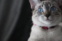 BAĞLıLıK - Evcil Hayvan İle Yaşayan Çocukların Sorumluluk Bilinci Daha Yüksek