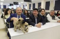 HUKUK FAKÜLTESI - Yavru Köpekler Hukuk Dersinde