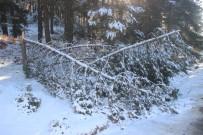 EDREMIT BELEDIYESI - Kar Ve Fırtına Ağaçları Kırdı