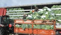 KARNABAHAR - Kışlık Sebze Fiyatları Üreticinin Yüzünü Güldürmedi