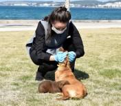 YAVRU KÖPEK - Sevimli Köpekler Yuva Arıyor