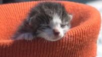 KALP MASAJI - Yavru Kediyi Kalp Masajı Ve Suni Teneffüs Yaparak Hayata Döndürdü