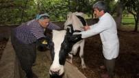 HAYVAN PAZARI - Hayvan Hastalıkları İle Mücadele Düzce'de Devam Ediyor