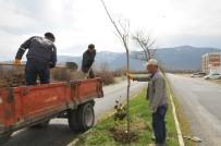 LALE SOĞANI - Akşehir'de Ağaçlandırma Ve Budama Çalışmaları Sürüyor