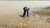 BOĞAZKÖY - Tarladan Balık Topladılar