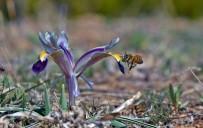 MUNZUR - Tunceli'de Bahar Çiçekleri Açtı