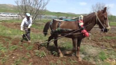 Gercüş'te At İle Çift Sürme Geleneği Devam Ediyor