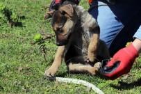 YAVRU KÖPEKLER - Ekipler, Yavru Köpekler İçin Seferber Oldu