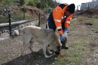 SALDıRGANLıK - Gölbaşı Belediyesi Sokak Hayvanlarını Yalnız Bırakmadı